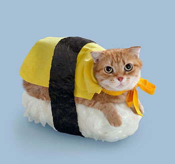 Top 17 of the Funniest cat costume ideas