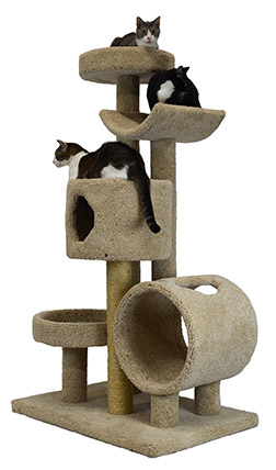 Best Perches for Large Cats (+Maine Coons)