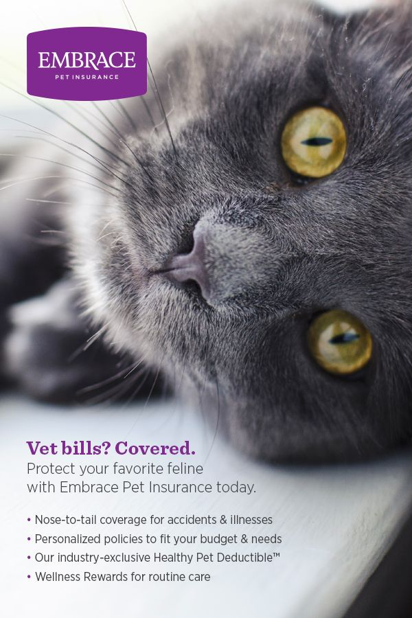 Embrace Cat Insurance - A Comprehensive Review